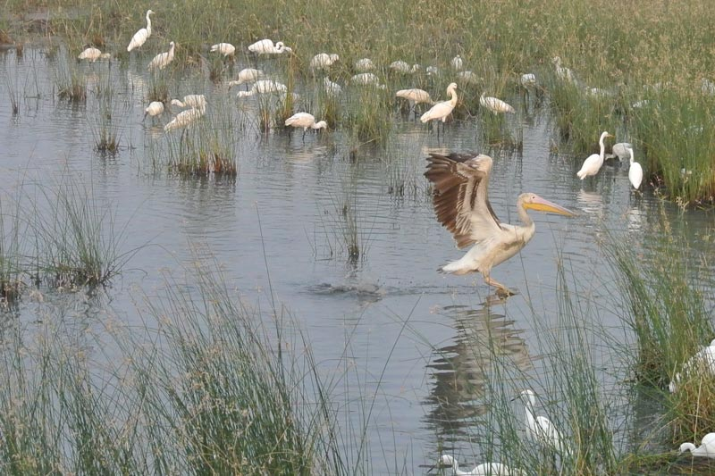 The Origin of the Sultanpur Bird Sanctuary